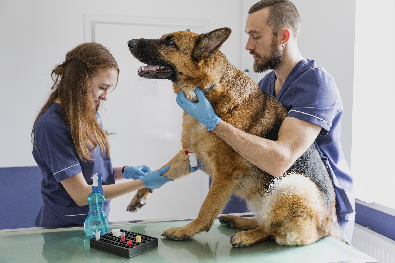 Doação De Sangue Para Pets