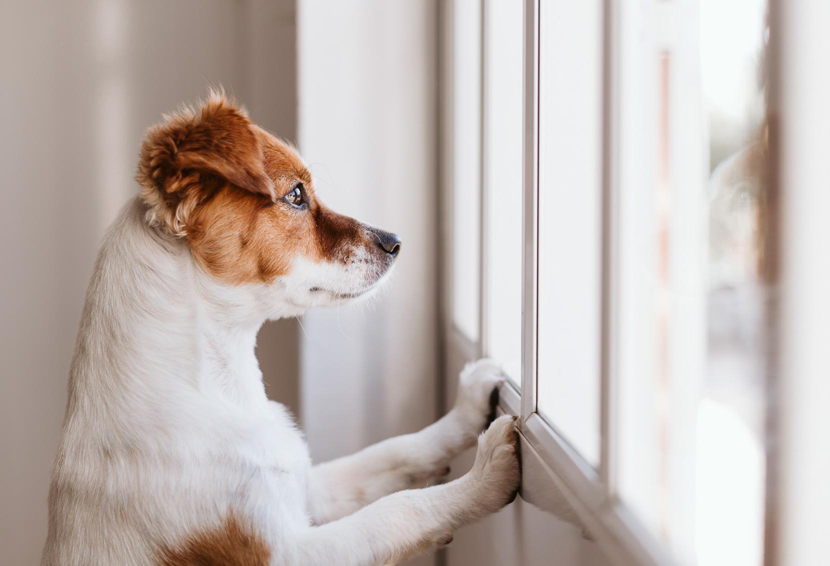 Cuidados Com Os Pets Na Quarentena