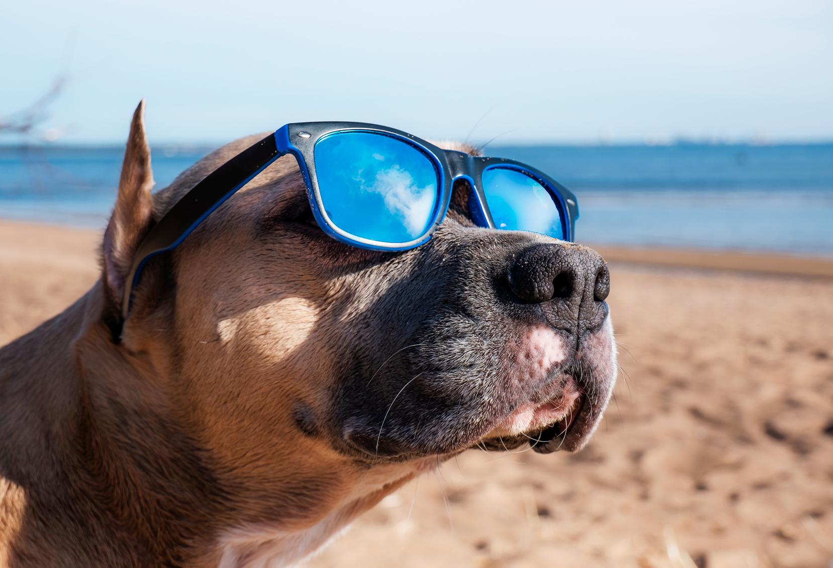 Verão Pet: Diversão E Cuidado
