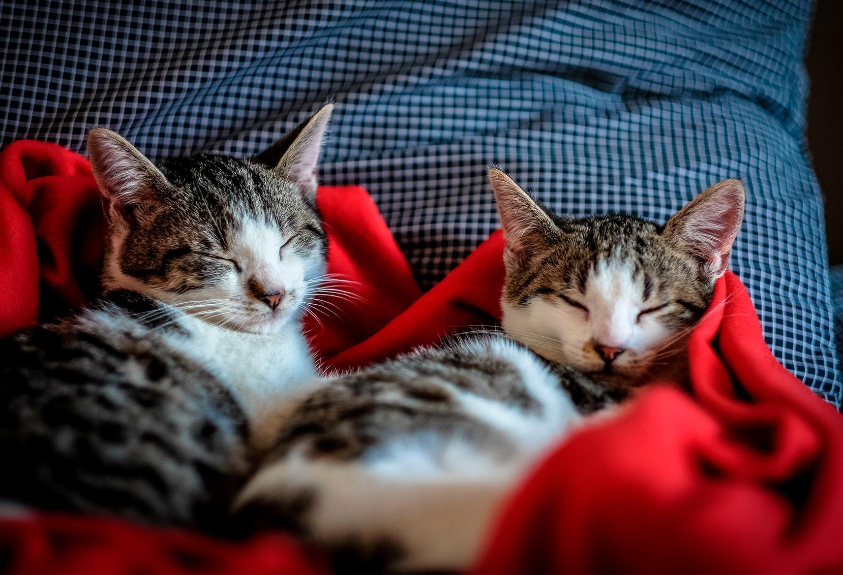 Como Cuidar Dos Animais De Estimação No Frio